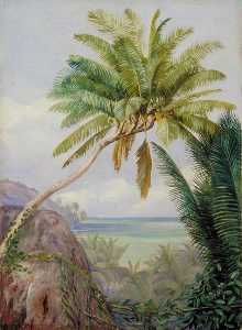 The Six Headed Cocoanut Palm of Mahé, Seychelles