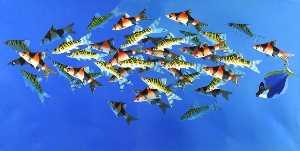 Tropical Fish 5