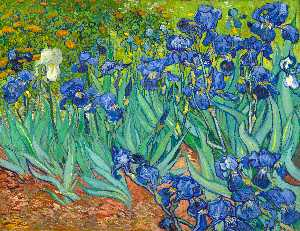 Vincent Van Gogh - Irises [1889] - (oil painting reproductions)