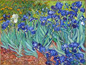 Vincent Van Gogh - Irises - (oil painting reproductions)