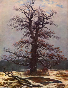 Oak tree in the snow