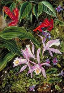 野生の 花 の  ダージリン  インド