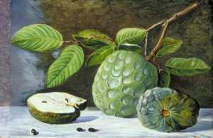 Foliage and Fruit of the Cherimoyer