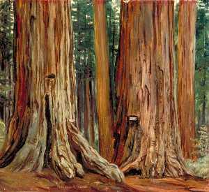 'Castor und Pollux' in der Calaveras Hain Groß Bäume , Kalifornien