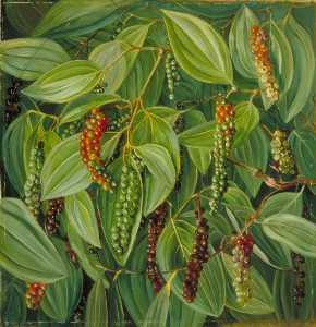 Blattwerk blumen  und  Frucht  von  der  pfeffer  pflanze