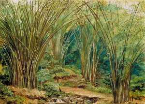 谷 の  竹  近い  入浴  ジャマイカ