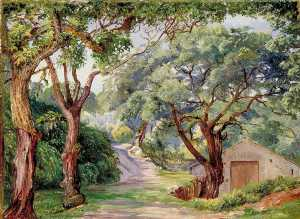 Cork Trees at Cintra near Lisbon